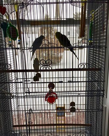 Fair Haven, VT: Two parakeets in Parlor/Drawing Room