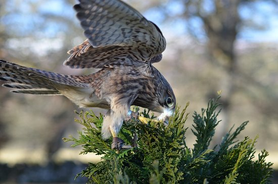 Highland Falconry at The Struy Inn