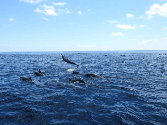 Drake Bay, Costa Rica: Pelagic tour