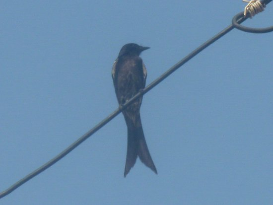 Bird On A Wire Picture Of Wat Sangkat Rattana Khiri Uthai Thani