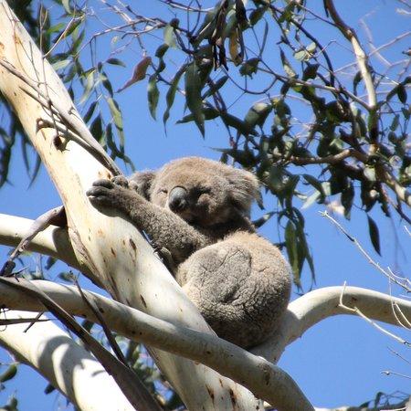 Cowes, Australia: photo2.jpg