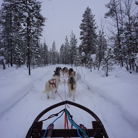 Jokkmokk Mountain Travellers - Tours