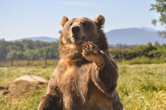 Port Angeles, Etat de Washington : Say hi to the waving bears as you drive through the farm!