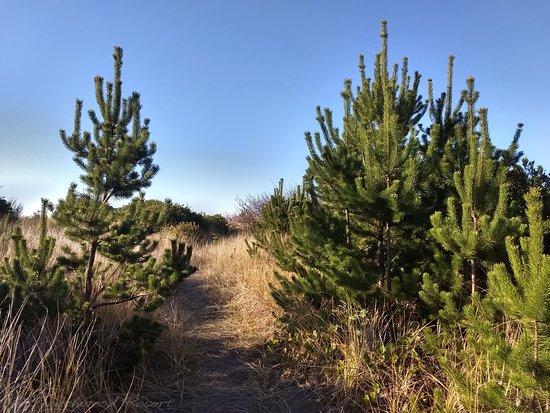 Beachwood Resort: Trail to the Ocean