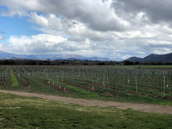 Santa Ynez, Califórnia: Wine tasting with a view