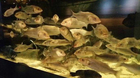 The Maritime Aquarium: IMG-20180219-WA0195_large.jpg