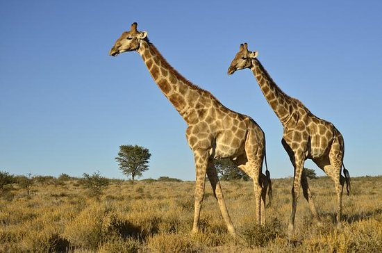 Demi-journée Safari de Durban