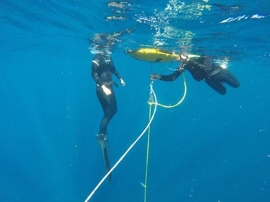 أشمور, أستراليا: A day of great visibility freediving off the Gold Coast.