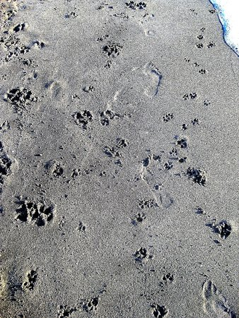 Venice Beach: Just as many dog footprints as humans (if not more!)