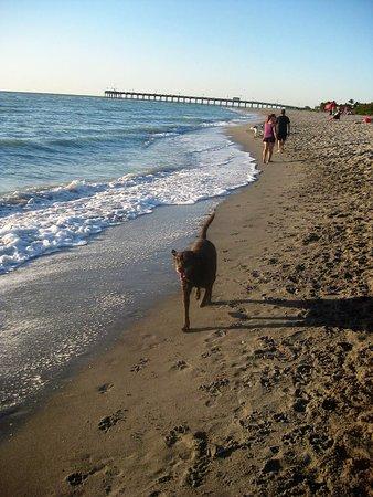 Venice Beach: Plenty of room to roam!