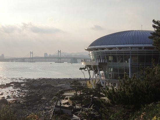 Dongbaekseom Island: 釜山冬柏島