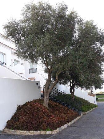 Benalup-Casas Viejas Photo