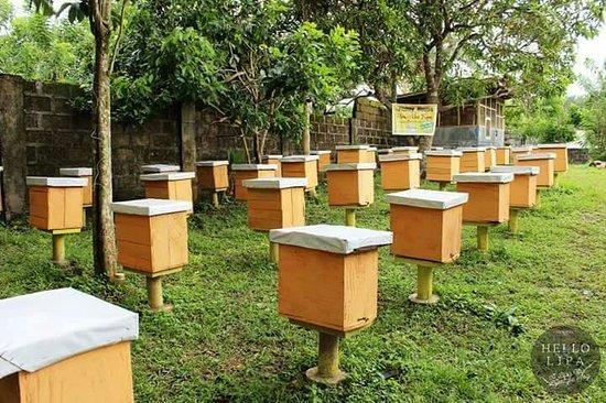 Honey House Honey Bee Farm (Lipa City) - 2020 All You Need to Know ...