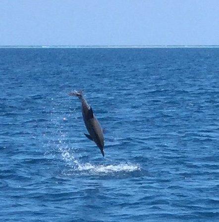 阿杜環礁照片