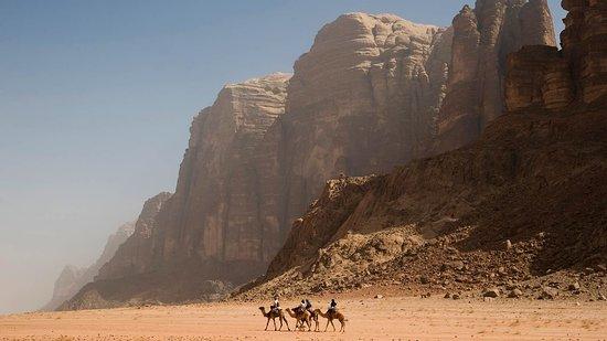 Wadi Rum Village, จอร์แดน: camel