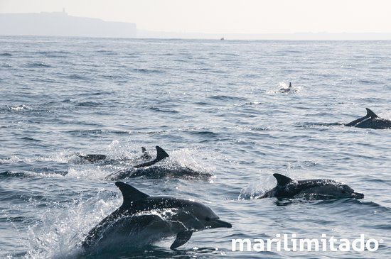 Sagres, Portugal: Delphinus delphis (Common dolphins | Golfinhos-comuns) and Cape St. Vincent in the background