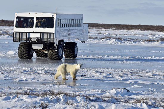 Churchill, Kanada: An official Tundra Buggy © Fang Tiemann