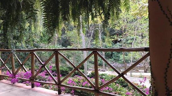 Rancho El Charro: View from the restaurant