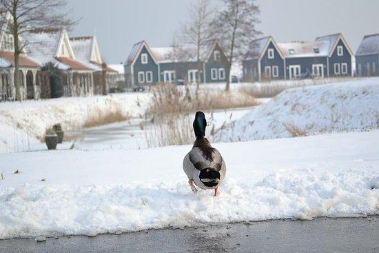 Bruinisse, Belanda: Eend in de sneeuw op Aquapark