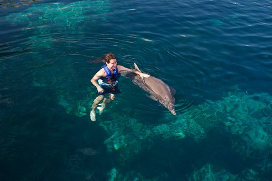 Riviera Maya, México: The One is THE EXPERIENCE with dolphins.