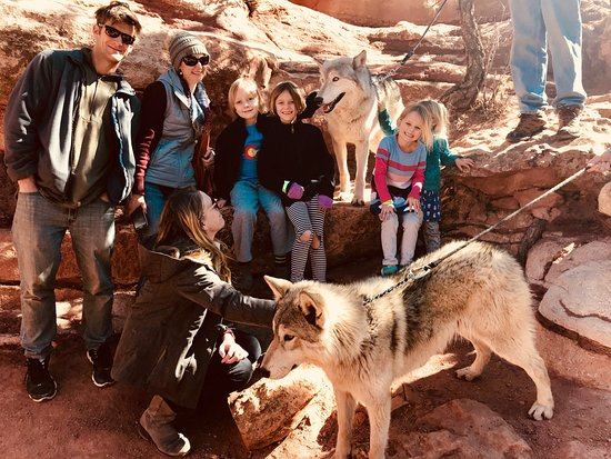 Manitou Cliff Dwellings: Wolf Visit!