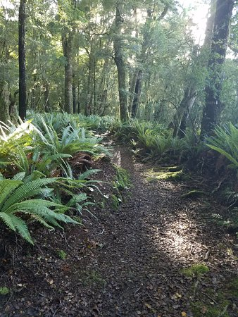Nelson Lakes National Park: walking trail