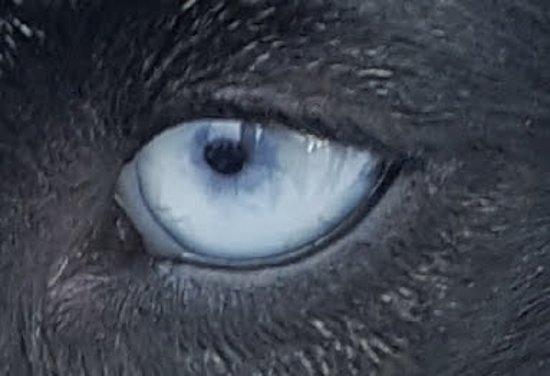 Ely, MN: Beautiful eyes!