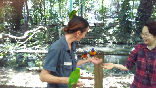 Daintree Mangroves Wildlife Sanctuary Photo