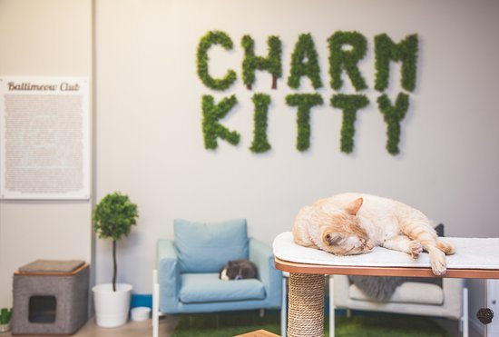 ‪Charm Kitty Cafe‬