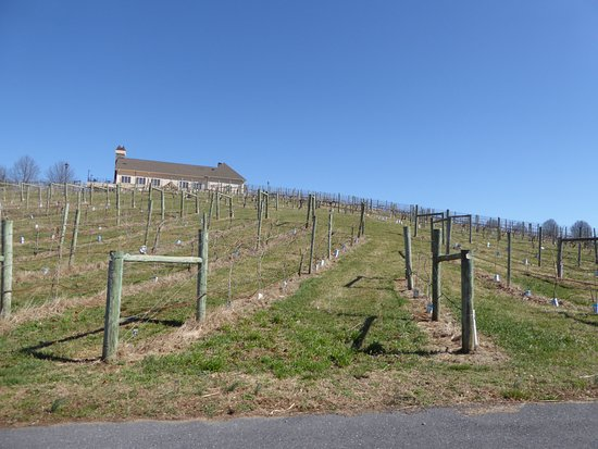 Bluestone Vineyard: Vines