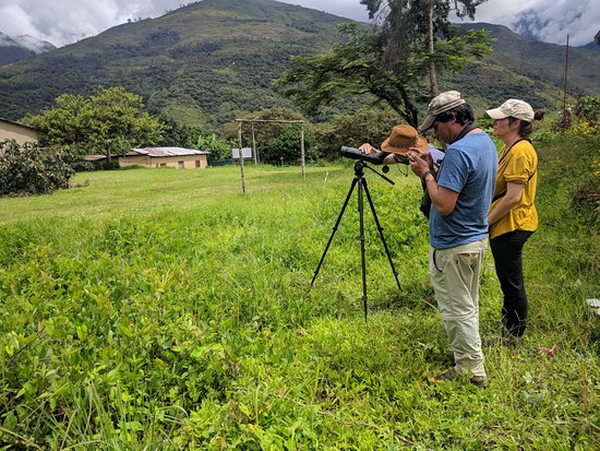 Habitats Peru Travel: Looking for birds at the IPAL lodge, Huayopata.