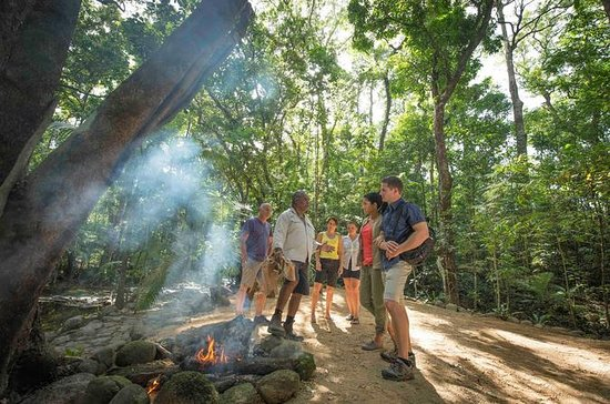 Daintree Rainforest Cultural Tour...