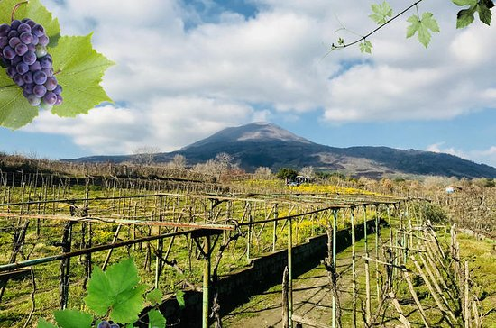 Pompeii and Wine Tasting on the
