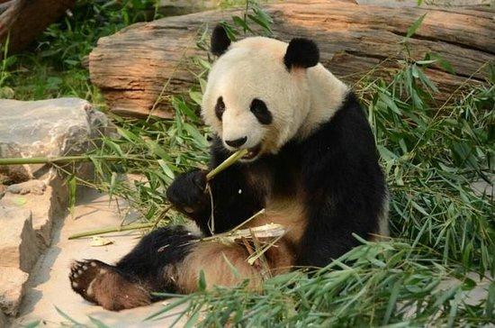 Tour Privado: Veja Pandas Gigantes e...