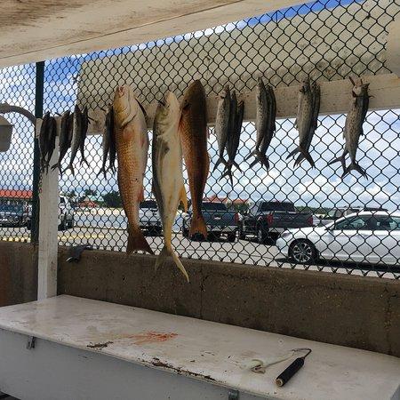 Fishing Frenzy Charters: photo2.jpg