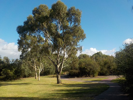 Brunswick East, Australia: Old trees and grasslands