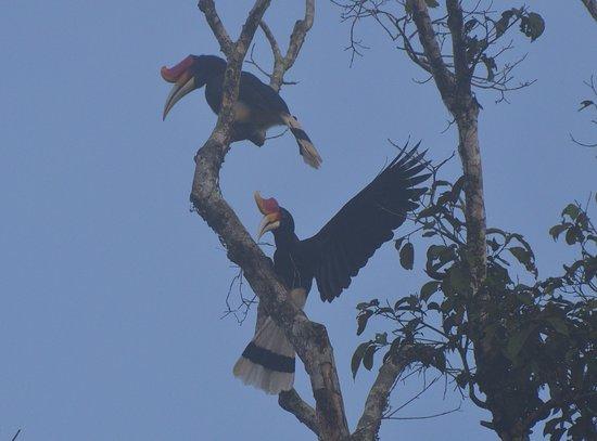 Kinabatangan District Resmi