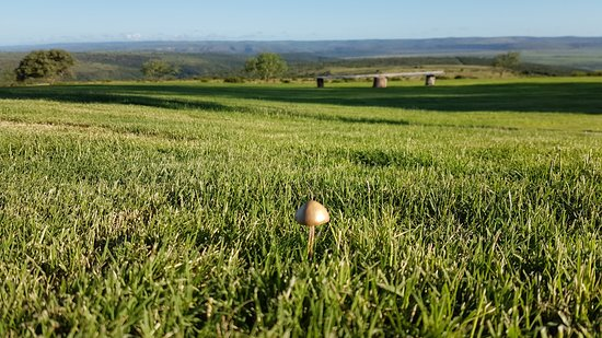 Paterson, South Africa: Golden mushrooms at sunset
