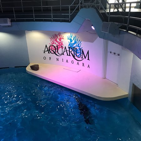 写真Aquarium of Niagara枚