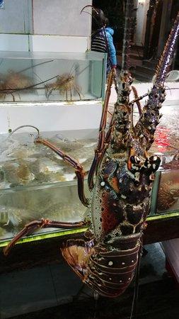 Huge live lobster