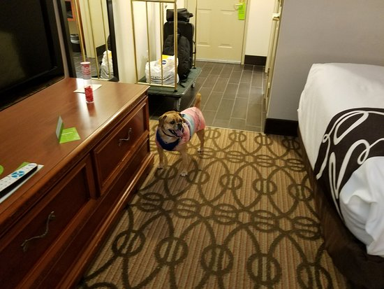 La Quinta Inn & Suites North Platte: Our dog inside our room