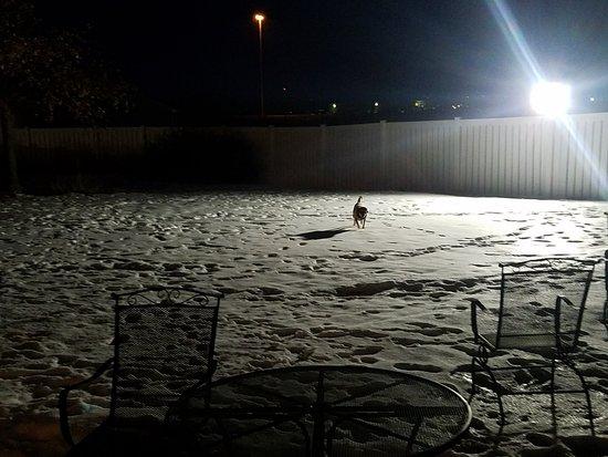 La Quinta Inn & Suites North Platte: Dog area outside