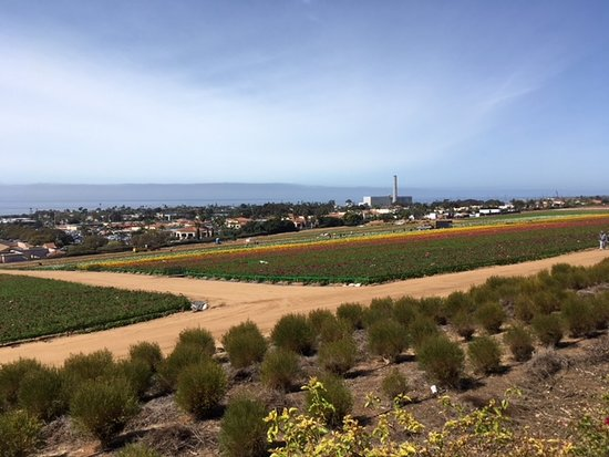 写真The Flower Fields at Carlsbad Ranch®枚