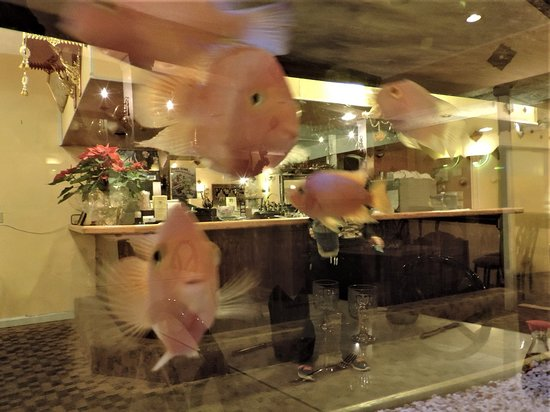 ออเบิร์น, เมน: Thai Dish has the cleanest aquarium ever
