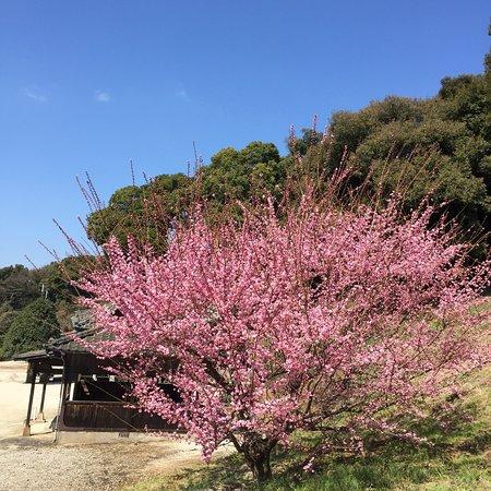 Ushinoo Shrine
