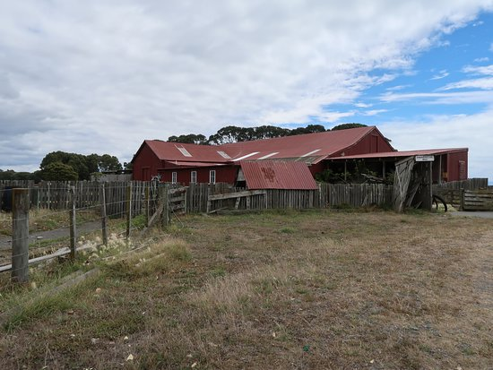 Te Awanga, Nueva Zelanda: Clifton Sheep Farm