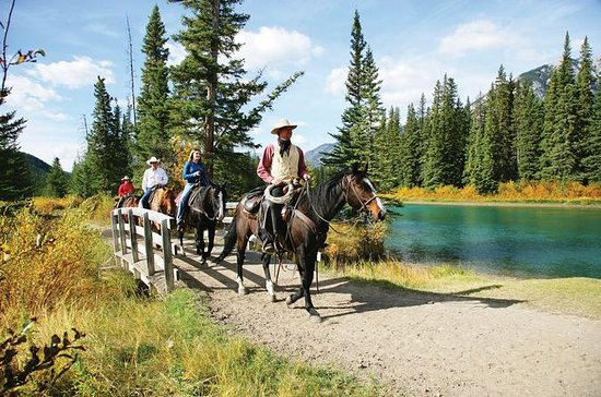 1 Hour Banff Horseback Riding...