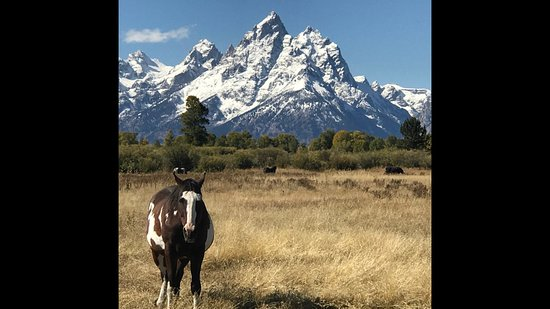 Teton Excursions