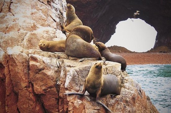 Full-Day Ballestas Islands and...