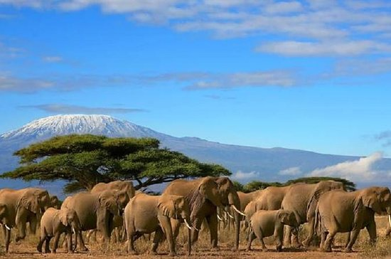 Amboseli National Park from Nairobi...